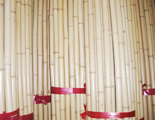 白竹(輸入)